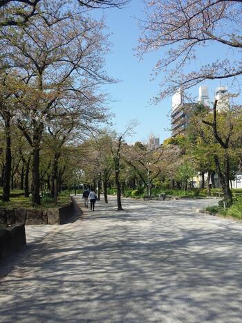 ウエストゾーンの向かいの「隅田公園」は、隅田川沿いにあり、右岸は浅草で左岸が墨田区の向島エリアです。東京ミズマチのオープンに伴い広場が整備されたので、ベンチに座ったり、芝生にレジャーシートを敷いてピクニックを楽しむこともできますよ。