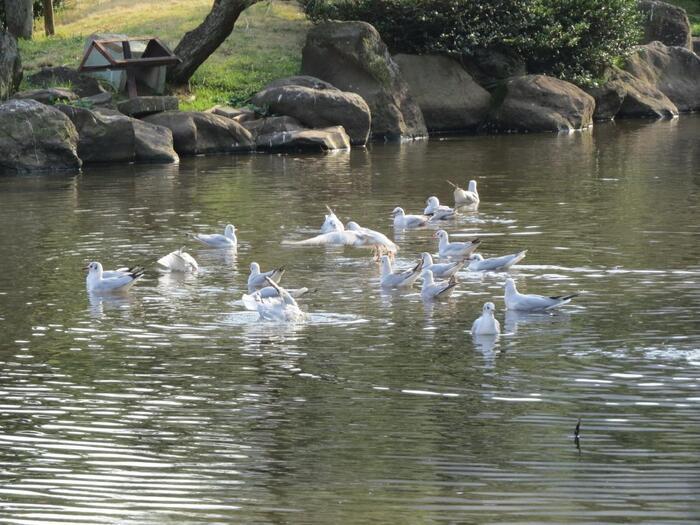 公園内には日本庭園があります。この庭園は水戸徳川邸内があった場所で、関東大震災によって全壊するまで代々ここに住んでいたと伝えられています。現在は池や木々など自然が美しく、四季折々の表情を感じられます。