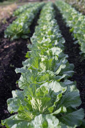 皮から葉まで使い切り。「大根」を大量消費したい時の簡単・人気レシピ集