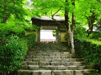 「京の奥座敷」とも呼ばれる大原。高雄同様、市内中心部よりも3~5度気温が低く、古くから避暑地として親しまれてきました。そんな大原で、名前の通りひっそりと佇んでいるのが「寂光院」です。