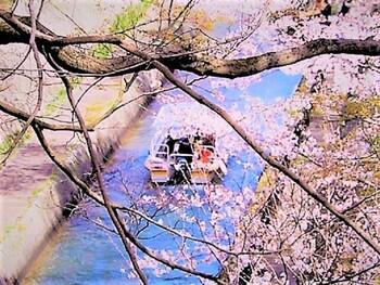 桜が見頃を迎える頃には、桜の名所は大変な人出になり、入るだけで長い行列に並ばなければならないことも。  それを回避できるのが、「びわ湖疎水船」。琵琶湖疎水と呼ばれる水路を船で巡ります。ネットから事前予約をすれば、行列に並ぶことなく桜をゆったりと堪能できますよ。