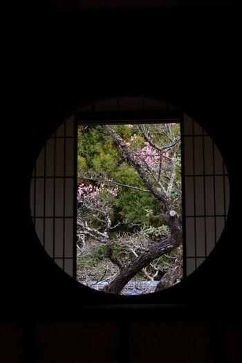 梅や桜以外にも見どころはたくさん。例えば、書院には禅の世界観を感じられるような「悟りの窓」があります。この悟りの窓からは紅梅を見ることもできますよ。