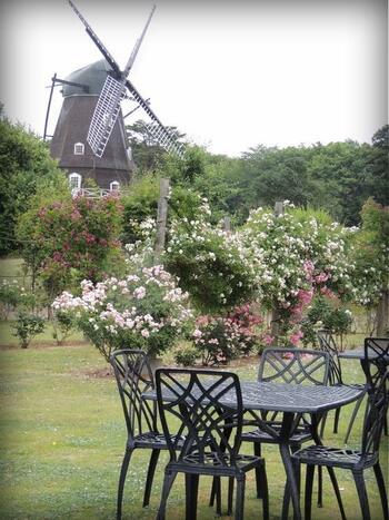19世紀のデンマークの田園風景を再現した風車を背景にピクニックなんていかがですか?