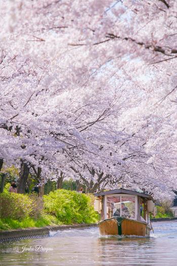 また、京都の南部・伏見の「十石船」も、同様に水路沿いの桜を楽しむことができます。こちらも事前予約が可能ですよ。