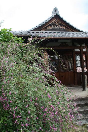 秋の七草の一つである萩。その萩が9月に境内いっぱいに咲き誇るのが「常林寺」です。無料で拝観できるので、気軽に訪れてみましょう。