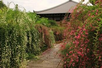 萩は小ぶりな花ながら、背が高く色とりどりで見ごたえがあります。境内の通路の両脇からこぼれるように咲く様は圧巻!