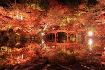 夜間はライトアップがされてより幻想的な光景に。水鏡も美しく目に映ります。