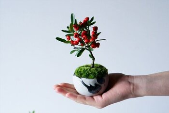 肩ひじを張らずに、暮らしの中で自然を愛でる「石木花」の盆栽。こちらは冬におすすめのトキワサンザシです。  枝先に付いた真っ赤な実は、冬の長い期間楽しむことができます。また、春~初夏の頃には花をつけるので、花も実の両方を楽しむことができる植物です。  目にも鮮やかな植物は、おうち時間も明るくしてくれそうですね。