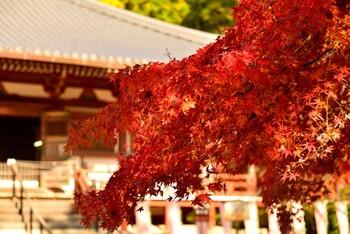 桜の時期と共に、大変な人混みとなるのが紅葉シーズン。紅葉の名所では、なかなか自分のペースで紅葉を眺められないですよね。