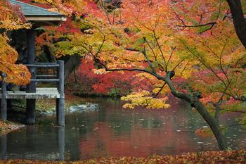 11月中旬になると紅葉も。モミジだけでなく、アメリカハナノキやヨーロッパカエデなど海外の木々の紅葉も楽しめますよ。