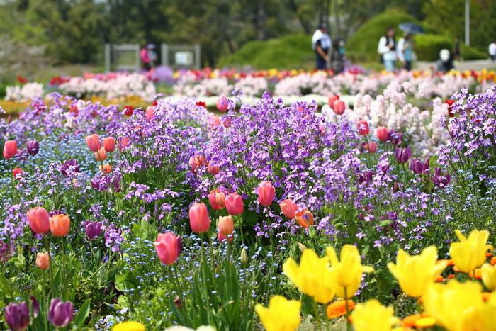 服部緑地は、豊中市西部に位置する公園。大阪府最大級の面積を誇り、広場やバーベキュー場、野外音楽堂、博物館といったレジャー・文化施設が充実しています。しかし、一番の魅力は巨大な円形花壇や、子どもが自由に走り回れる原っぱ、森林浴にもぴったりな松林など。季節によって違った色とりどりの花が、四季折々の景色を見せてくれます。休日になればイベントが開かれることもあり、子供や家族連れでにぎわうスポットです。