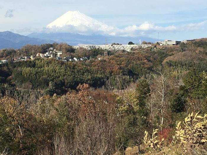 ガーデンの緑と、青々とした富士山のコントラストはここでしか見られない絶景。春は淡い緑が生い茂り、秋は黄色や赤に染まって、富士山の美しさを引き立てています。夕暮れ時は真っ赤に沈む夕日に癒されますよ。