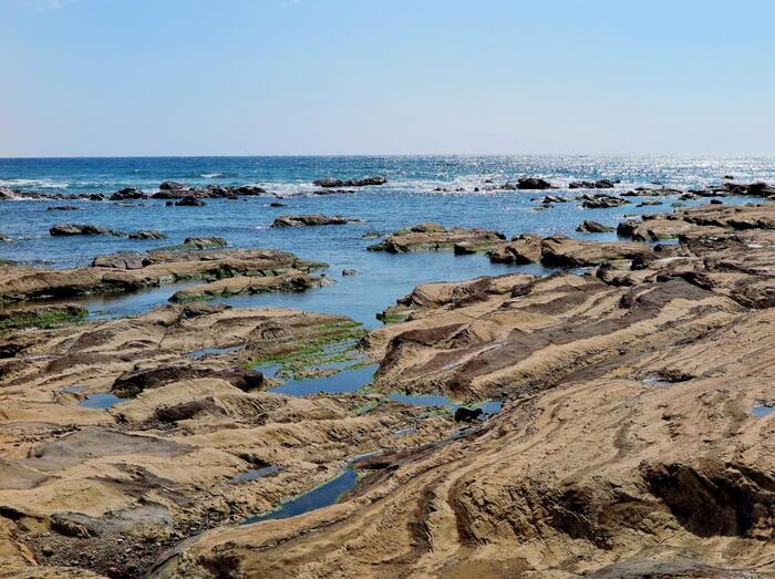 施設のすぐ下にある岩礁は人気スポット。大潮前後の干潮時間には潮だまりが現れ、岩場からカニや貝が姿をのぞかせますよ。