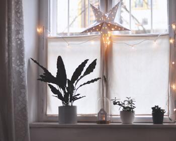 自然を敬い植物と密接に関わりながら生きているスウェーデンの人々。家には窓辺に植物を飾る棚が備え付けられているほど、当たり前の様に観葉植物や花をたくさん並べます。  外の気温に関係なく暖かな環境で育った植物は、冬の寒さを忘れられるひとときをくれそうですよね。今年の冬はお気に入りの花瓶を用意して、ぜひ緑や花との暮らしを楽しんでみてください。