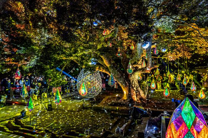 南国ムードあふれる江の島サムエル・コッキング苑は「ホウセキFOREST」というイルミネーション空間に様変わり。物語の世界に入り込んだような非日常感を体験できます。