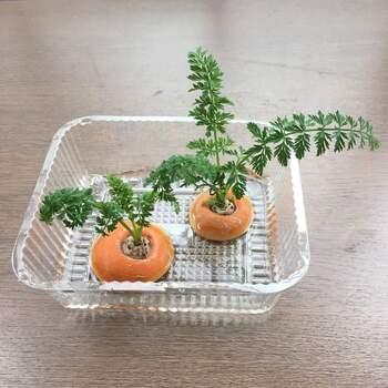 オレンジ色のヘタから鮮やかな緑の葉っぱが伸びてくるのが楽しいニンジン。食べるのはもちろん、見た目を楽しみたい時にもおすすめです。1~2cmほどの厚みでヘタを残し、水に浸けます。毎日の水換えはもちろん、底のヌメリもこすって落とすと腐りにくくなります。