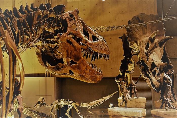46億年前に誕生した地球には、40億年前から命が生まれたと言われています。  そんな途方もない時を超え、生物の進化と変遷を追うことができるのがこちらのフロア。  今とは全く形の異なる生物の祖先から、子どもたちが目を輝かせる恐竜まで・・・所狭しと惜しげもなく展示された骨格や化石の数々は、思わずじっと見入らずにはいられません。