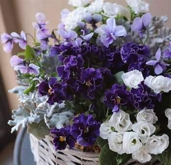 花言葉は色によって異なります。西洋ではまた違った花言葉が用いられているそうなので、その違いを楽しんでみるのもいいですね。