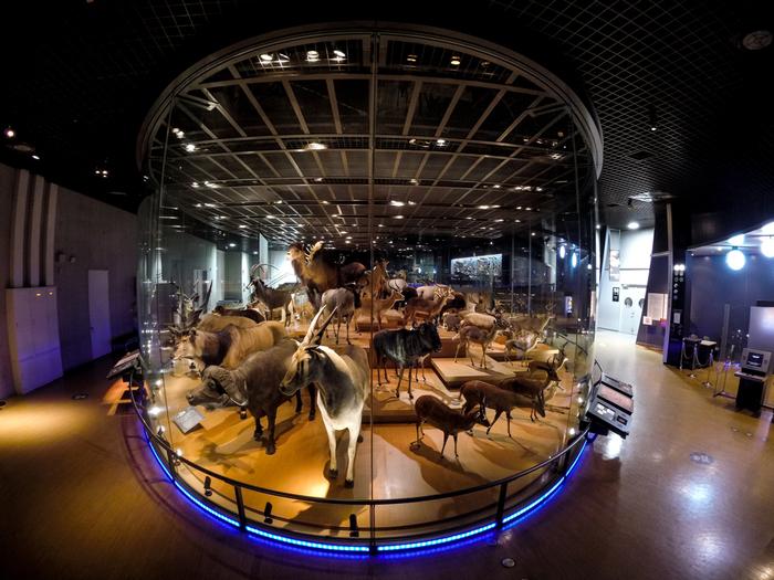大人も子供も心満たされる!「上野公園にある博物館」へ遊びに行こう