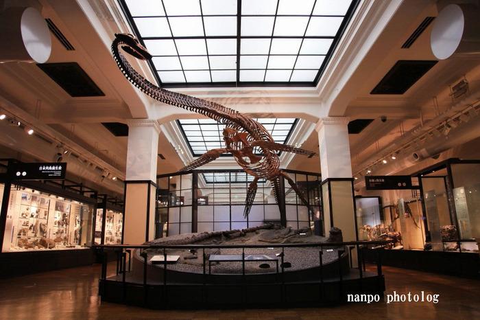 「化石」などを豊富に展示したのが日本館3F。「化石」や「岩石」といった資料を見つめていくことは、この地がどのように今に至ったのかを知る一つの方法。「日本誕生以前」といった、気が遠くなるような古代の時へと思いを馳せてみてはいかがでしょう?  そんな3Fで誰しもが圧倒されるのが、日本を代表する首長竜「フタバスズキリュウ」の復元骨格展示。なんと、約8500万年前の種(しゅ)なのだとか・・・!日本全国で数々の首長竜の化石等発見の報告はあるものの、種(しゅ)の特定に至ることができるレベルのものは他にないというエピソードからも、この復元骨格がどれだけ貴重なものかがわかるのではないでしょうか。