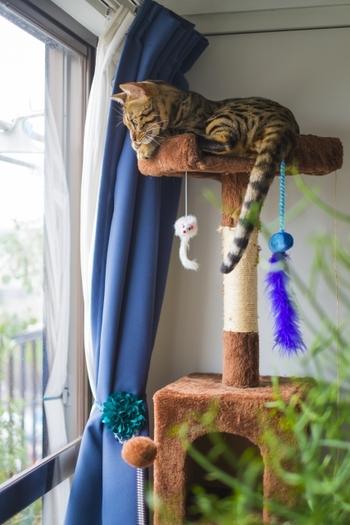 人や動物、車などが通る様子を見られる窓際は、猫ちゃんのお気に入りスポット。日差しを浴びながらウトウトしたり、縄張りを守ったり、充実した時間を過ごせます。