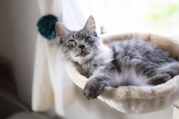 猫ちゃんの体にフィットするハンモックは、お昼寝にぴったり。丸いものやタワーに吊り下がっているものがあります。透明なハンモックは、愛猫の肉球が見えて癒やし効果抜群♪