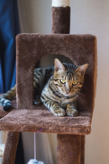 狭い所が大好きな猫ちゃんにとって、隠れ家は安心できる場所。隠れ家の中で丸まって眠っている姿を見られますよ!
