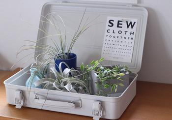 トランク型のケースに植物をディスプレイしたら、蓋の部分にポストカードをちょこっと添えて。これだけで、お店のようなおしゃれなディスプレイに格上げされます!