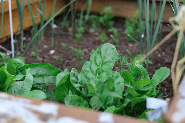 ちょっとした野菜や果物、ハーブなど育てやすい品種を選んで家庭菜園をしてみませんか?お庭はもちろん、ベランダのスペースをうまく活用したり、ミントなどハーブであれば水耕栽培もできるのでお家のなかでも育てることが可能です。
