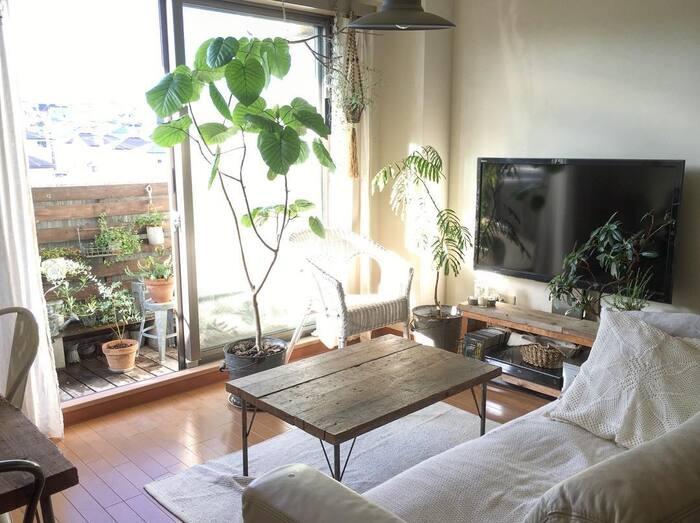 たくさんの観葉植物で、自然あふれる空間が広がっています。窓を開けることで屋外に自然と繋がり、自宅にいながらも開放的で心地よい空間に。窓辺の白いチェアもリラックスできそうですね。テレビ台やテーブル、クッションの質感などナチュラルな風合いでたくさんの観葉植物との相性も◎