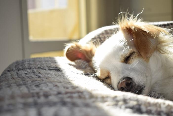 日照時間が短くなると、「セロトニンの不足」を引き起こすといわれています。セロトニンは人間の感情や、食欲を伝達する役割を担っている物質で、不足するとイライラしやすくなったり、気分が落ち込むといった症状が現れます。セロトニンは太陽の光を浴びることで合成されるホルモンのため、悪天候が続いたり、日照時間が短くなる冬には、不足しやすいとされています。