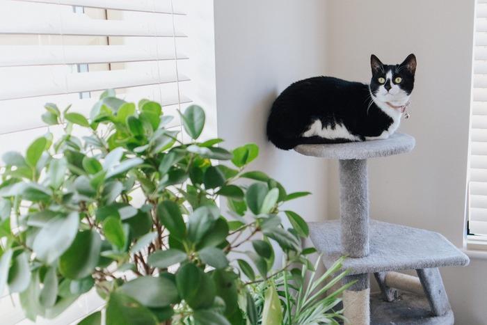 その植物・アロマは大丈夫?犬や猫が安心して暮らせる環境づくりをしよう