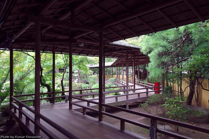 本殿の裏手にある日本庭園「邃渓園(すいけいえん)」。名造園師・永井楽山翁が、戦前から92歳で亡くなるまで心血を注いでつくりあげた美しい庭園が見どころ。園内には入れませんが、ぐるりと庭を囲むように回廊があるので、さまざまに景色が変わる眺めを堪能できます。(彫刻ギャラリーと共通の拝観料が必要です。)