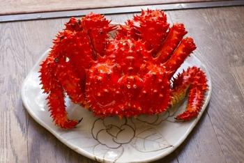 花咲ガニも甲殻類十脚目(エビ目)- ヤドカリ下目- タラバガニ科なので、タラバガニと同じく生物分類学上にはカニではなくヤドカリの仲間になりますが、前述したように日本の4大ガニの一種として人気があります。