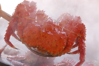 贅沢で味も良く食感も抜群なのでカニの王様と言われているタラバガニですが、実は甲殻類十脚目(エビ目) ヤドカリ下目- タラバガニ科に分類される甲殻類の一種なので、生物分類学上はカニではなく、ヤドカリの仲間なんです。