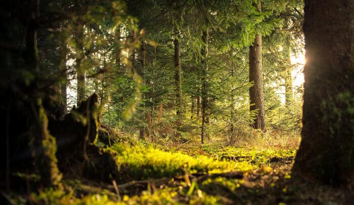 毎日時間に追われ疲れてしまっている人は、海や山など、自然に触れてみるのはいかがでしょうか?自然の中でも特に森林浴がおすすめ。樹木が放つフィトンチッドという物質には、精神の安定や睡眠促進、リラックス効果があると言われています。