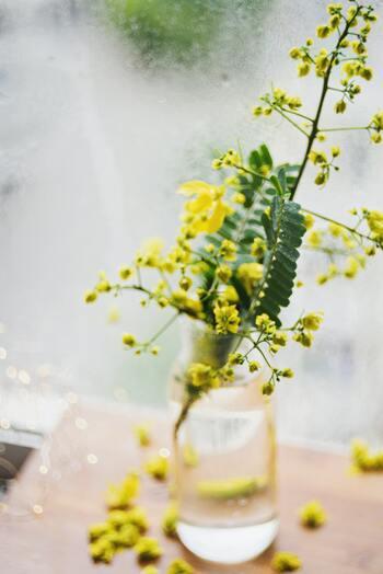 巣ごもり生活に小さな春を。黄色い「ミモザ」のおしゃれな飾り方