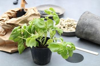 まずは、家庭菜園を始めるために最低限必要な道具を用意しましょう。