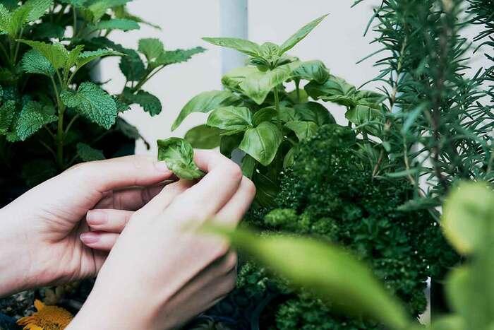 葉の緑を見たり土をいじったり、めぐる季節とともに五感を楽しませてくれる家庭菜園。ベランダのプランターでも家庭菜園しやすく、はじめての方でも育てやすい葉もの野菜や実もの野菜をご紹介します。