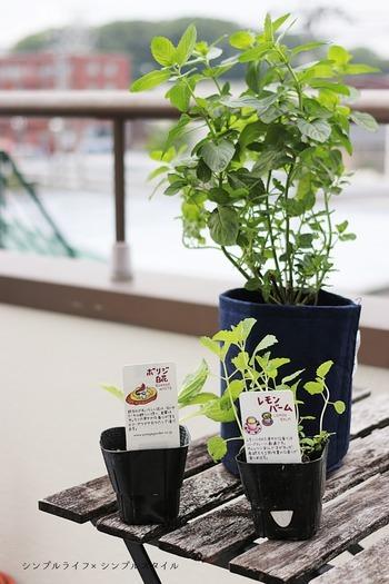 野菜などの植物は、葉や根を伸ばして息をして養分を作るため、新鮮な空気が必要です。ベランダなど狭い場所で野菜を育てる場合は、隣同士の葉が触れない程の間隔にプランターを置いて、風通しの良い環境を作れるかを確認しましょう。