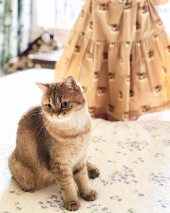 猫モチーフで欠かせないのが、アパレルから雑貨、コスメまでをも手がけるパリのファッションブランド『PAUL & JOE(ポール & ジョー)』。クリエイティブディレクターであるソフィー・メシャリーの愛猫の「ヌネット」は、ブランドのアイコン猫として、さまざまなアイテムに登場しています。くりっとしたつぶらな瞳、愛らしい表情。コレクターがいるほど「ヌネット」モチーフは、毎シーズン人気のアイテムです。