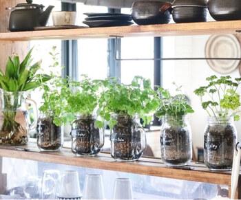 キッチンにもグリーンを置くと、ナチュラルでさわやかな印象がプラスされるのでおすすめです。キッチンの場合は、ハーブを栽培するのもステキですよ。こちらのブロガーさんは、100均のメイソンジャーで育てていて見た目もおしゃれ♪食べられるグリーンは、料理の合間にさっと収穫して取り入れることができるので楽しみが広がります。