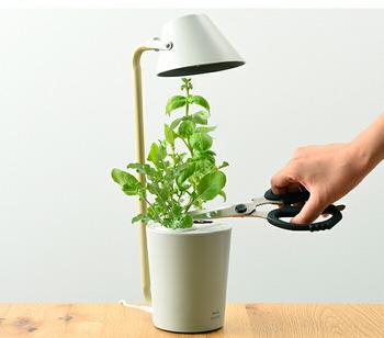 コンパクトな水耕栽培設備のキットです。培地フォームやお試しの肥料も付いているので、お好みの種で手軽に始められますよ。LEDライトが自動で点灯してくれる便利な機能付き。キッチンのおしゃれなインテリアになってくれそう♪