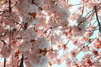 香りで春を先取り!新緑とそよ風を感じるアロマの使い方