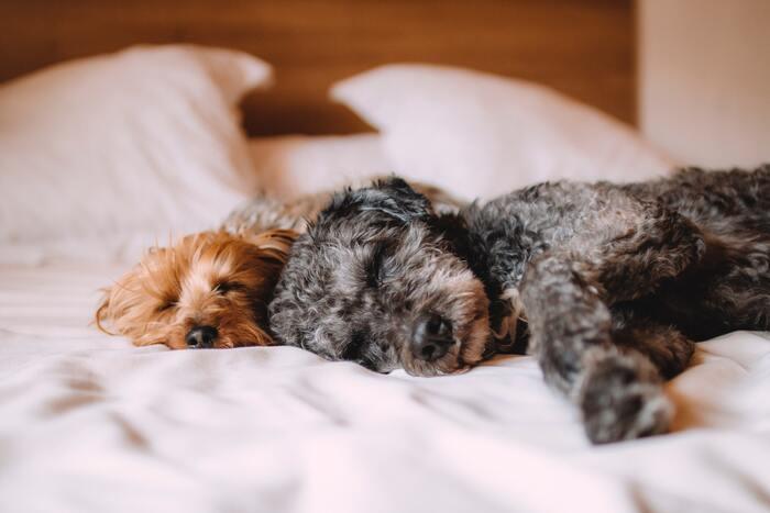 自分の感情をコントロールする上で大切な規則正しい生活習慣。人は生活習慣が乱れていると、情緒も不安定になりがちです。しっかり睡眠時間を確保し、なるべくバランスのよい食事を摂ることで心のバランスも整いやすくなります。