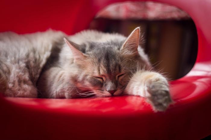 「何もせずに一日が終わってしまった・・・」と後悔や罪悪感を抱くのは、なんとなく過ごしてしまうから。逆に、「今日は徹底的に何もしないで過ごすぞ!」と設定した上で過ごしてみると、後ろめたさもなく心からリラックスできるひとときになるはず。  たまに物思いに耽ってみたり、知らぬ間に昼寝していた自分に気づいて「意外と疲れていたんだなぁ」と気づいてみたり。心と頭をクールダウンして余白を作るのも、時間がぽっかり空いたときにしかできないとっておきの過ごし方です。