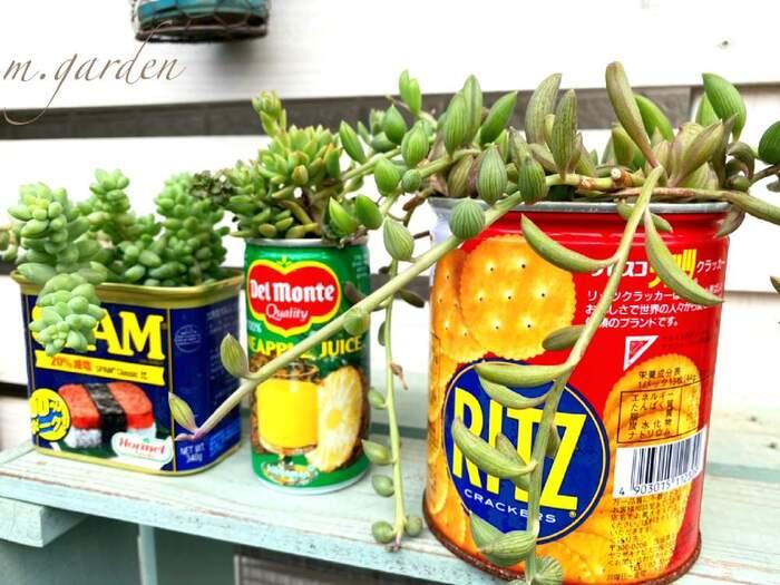 おしゃれな缶ならそのままでも素敵。ジュースやお菓子、紅茶の缶などいろいろ集めたくなります。大小さまざまな形の缶を使えば同じ色の植物でもバリエーションが広がりますね。