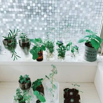 クリアなものが多いペットボトル。大小だけでなく、商品ごとにデザインが違うので光の屈折を楽しめます。植物の色を揃えて並べるだけでおしゃれな雰囲気になりますね。