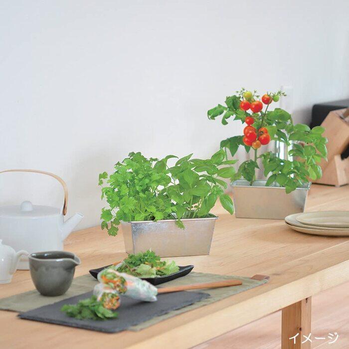 聖新陶芸 デリッシュガーデンダブル イタリアンセット(バジル・ミニトマト)