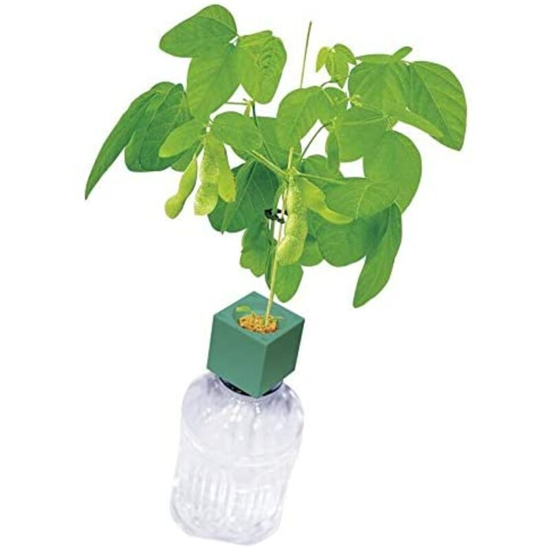 聖新陶芸 グリーントイ おつまみ枝豆 ペットボトルで育てる栽培セット